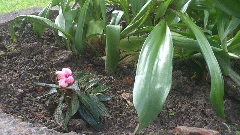 kwiatuchi